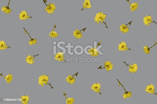 Yellow flowers blossom pattern on gray background. Flowers in volume fly, 3d effect. Zero gravity.
