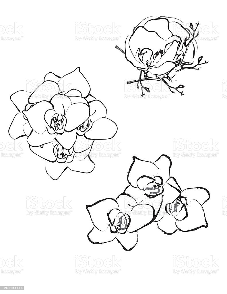 flower blossom pattern royalty-free stock photo