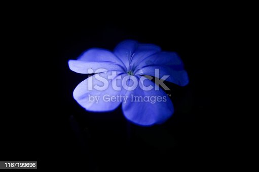 Flower blue in forest