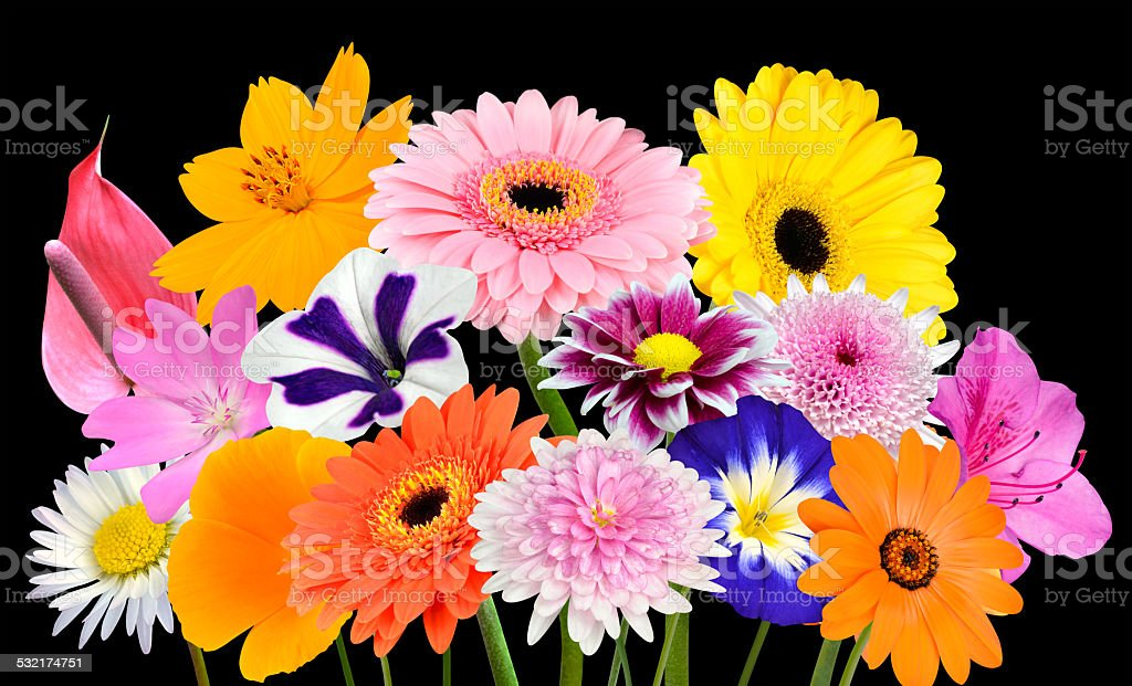 Flower Bouquet Collection Of Various Colorful Flowers Isolated Stock ...