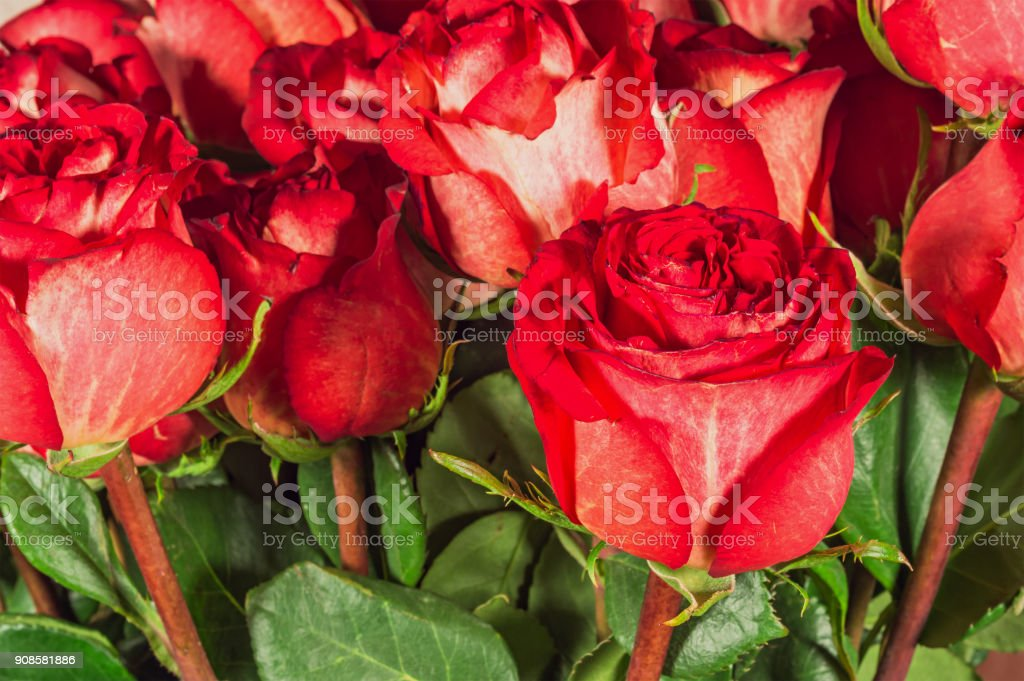 Flower bouquet from red roses stock photo
