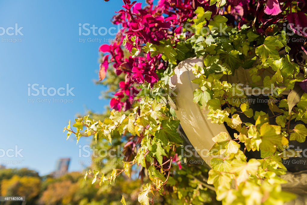 Flower Bouquet in Central Park NYC Travel Destination stock photo
