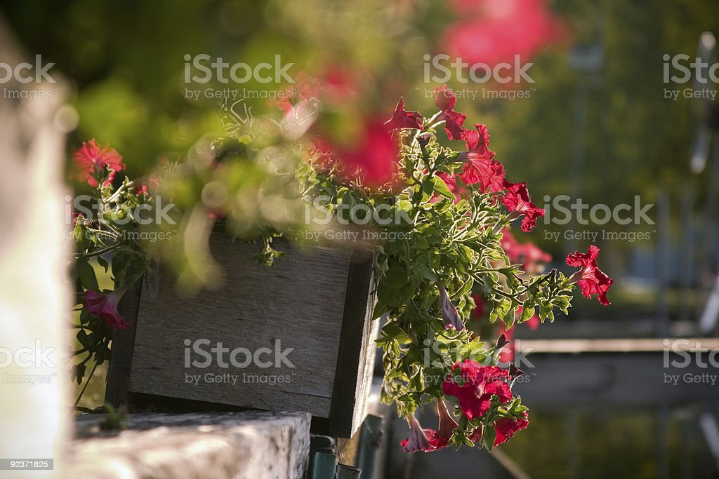 Flower box in the morning light royalty-free stock photo