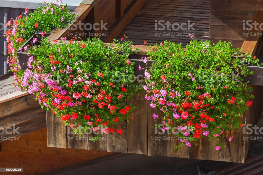Dazzling flowers in the flower box on the balcony