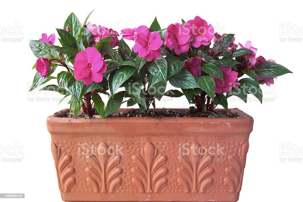 flower box stock photo