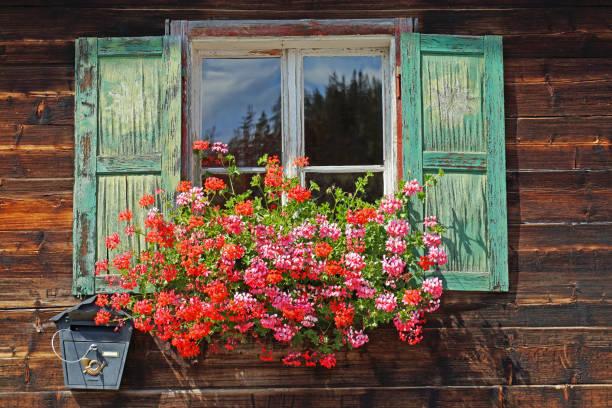 Flower box with geraniums – Foto