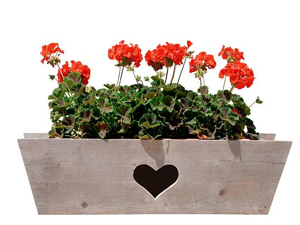 flower box with heart – Foto