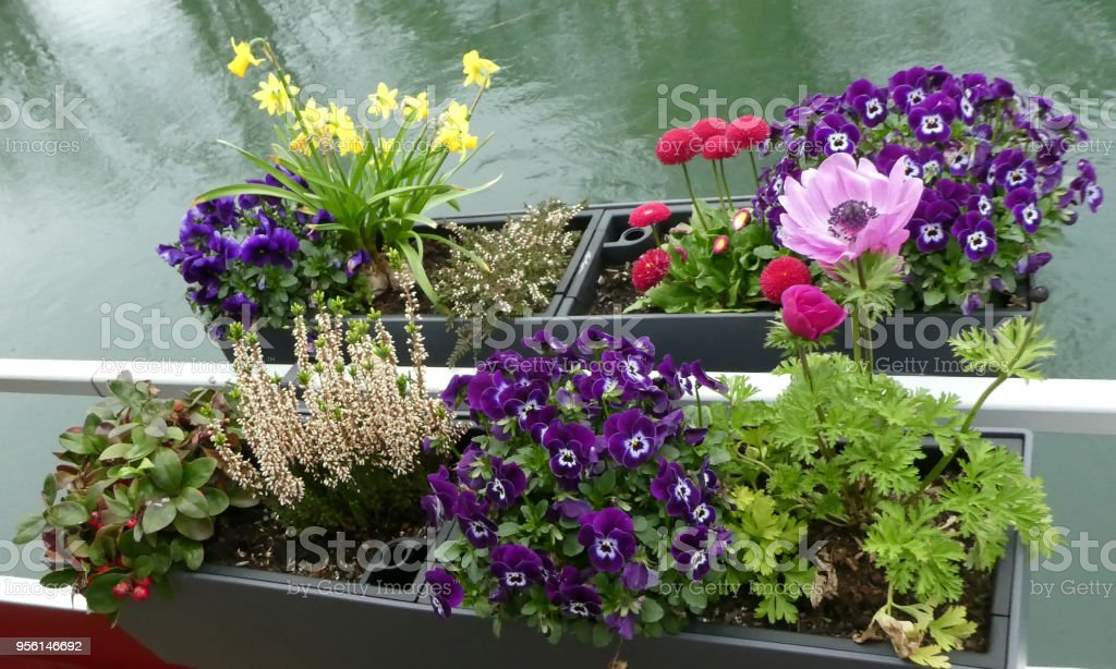 Flower boxes along edge of canal and waterfront along Rhone River and...