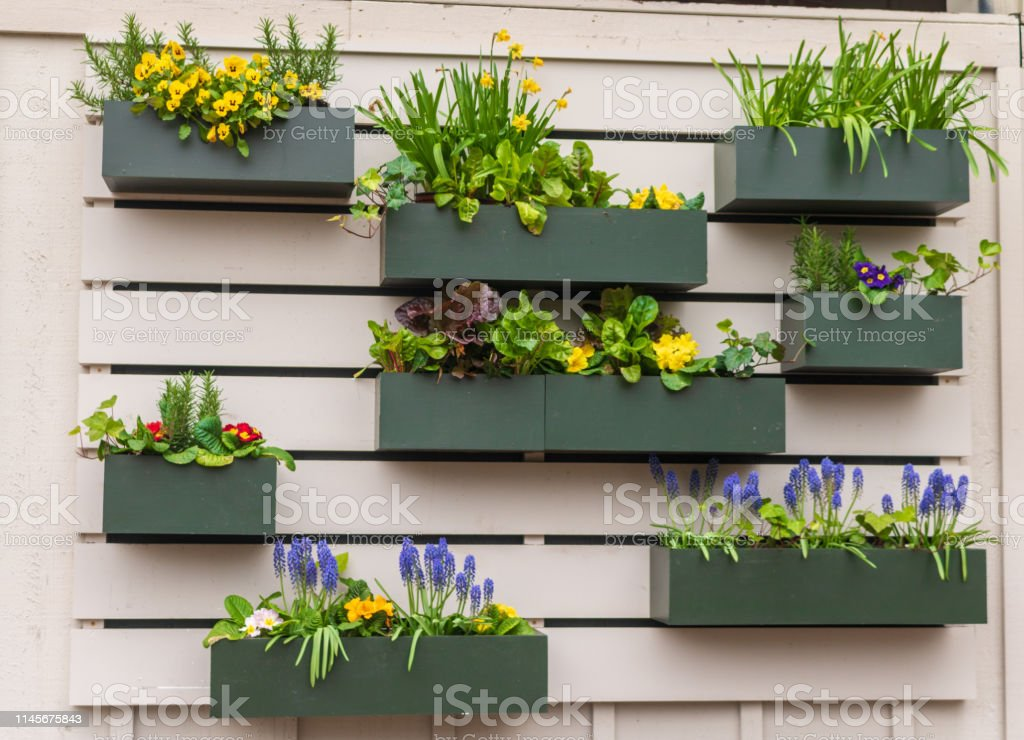 Flower boxes with spring flowers, herbs, and lettuce bloom on a wall