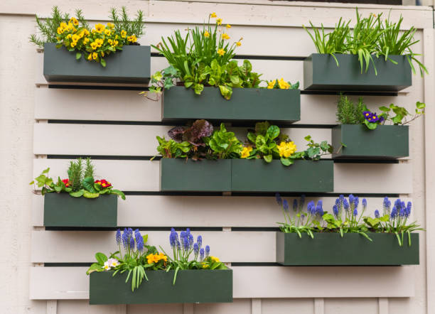 Flower boxes on a wall stock photo