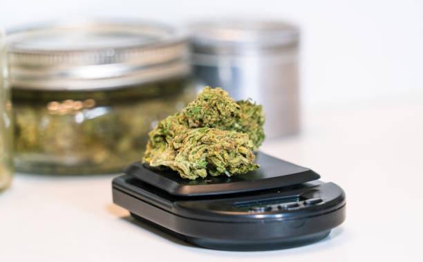 Blumenknospen sitzen auf einer digitalen Scrollae Marihuana Legalisierung THC Recreational und Medical – Foto