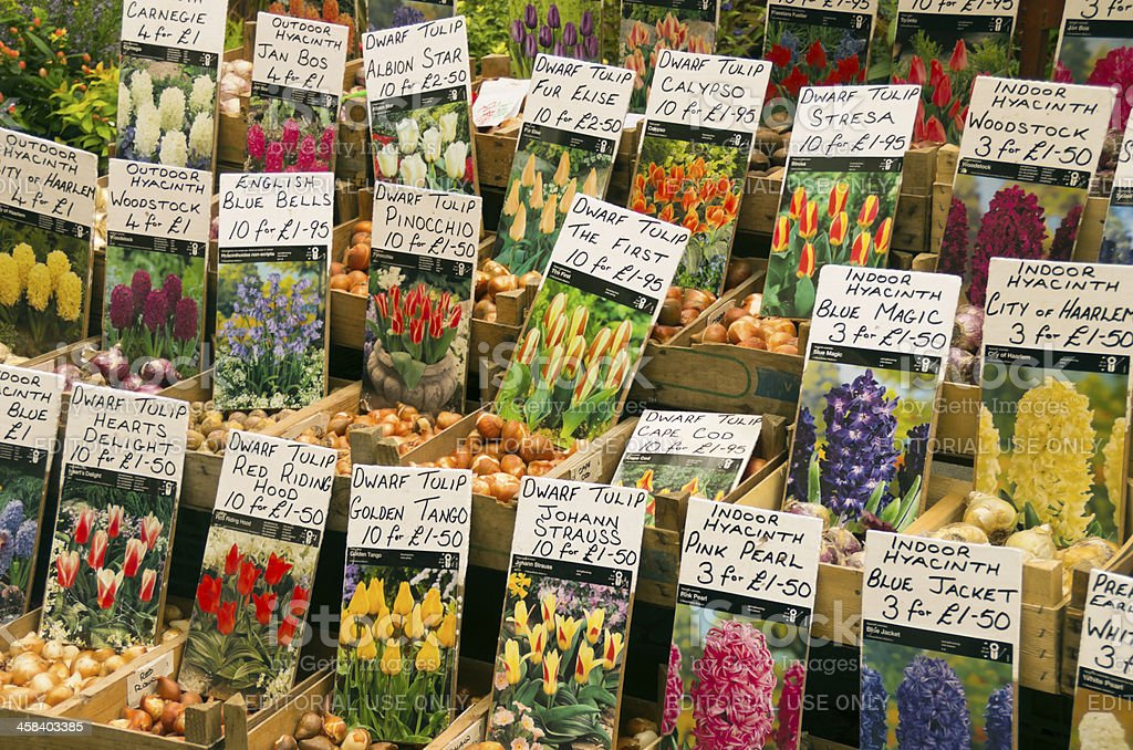 Flower bulbs for sale on a market stall royalty-free stock photo