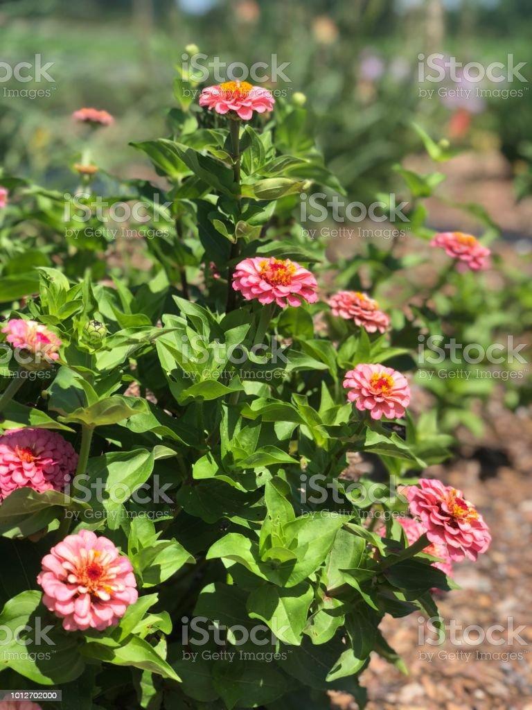 flower bush stock photo