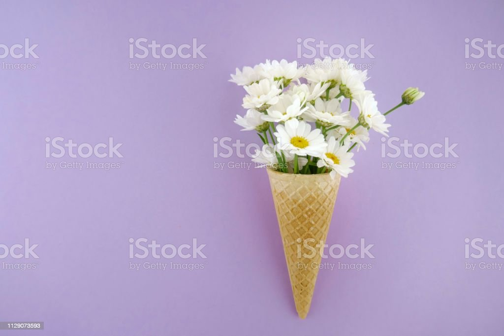 Flower card. White large daisies in a waffle cone on a light lilac...