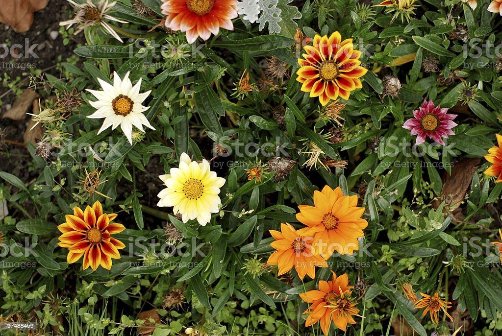 Flower carpet texture royalty-free stock photo