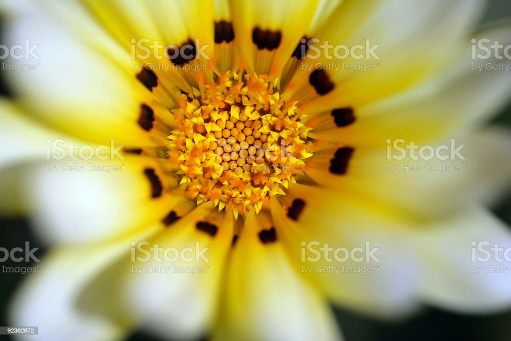 flower, central part royalty-free stock photo