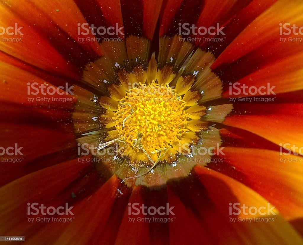 Flower close up royalty-free stock photo