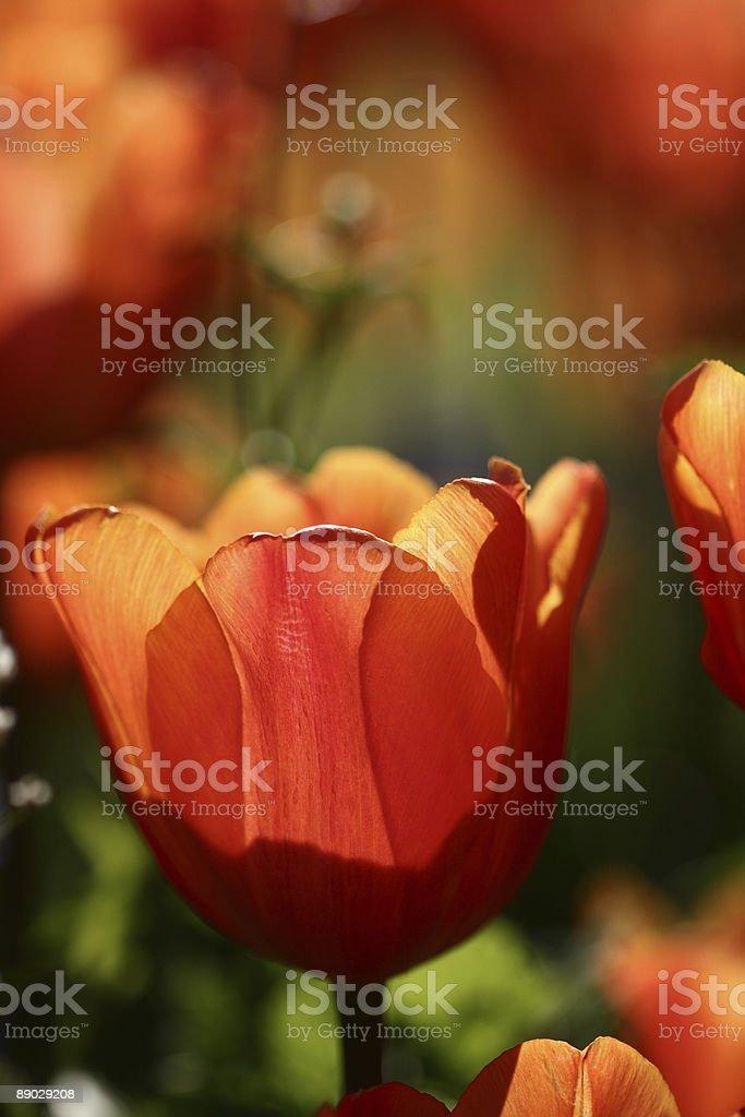 flower closeup royalty-free stock photo