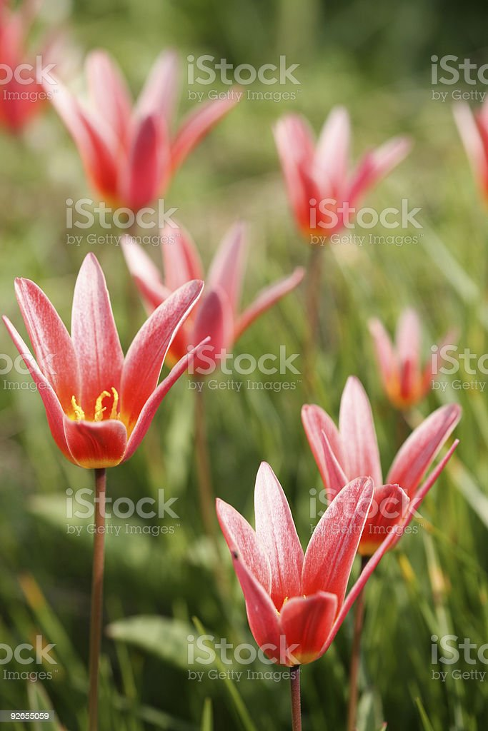 flower closeup royalty-free stock photo