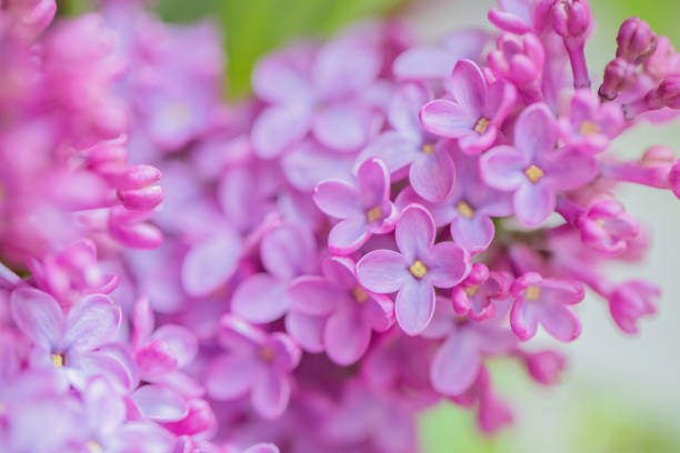 Flower Close-ups stock photo