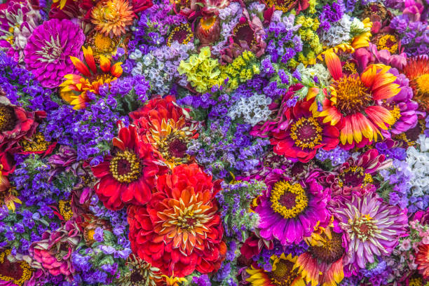 Flower collage picture id1004537168?b=1&k=6&m=1004537168&s=612x612&w=0&h=e0dtcsezpmand0ly1h0dusraj1xb1l5x8r5kcrsn4 a=