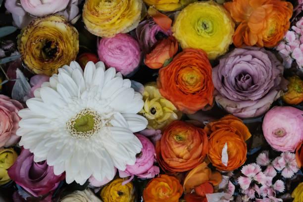 Flower collage picture id1143126953?b=1&k=6&m=1143126953&s=612x612&w=0&h=ugha4nqy1h2gjtt1nuwn1xy1pn3yhfdoh ljp2v1ufq=