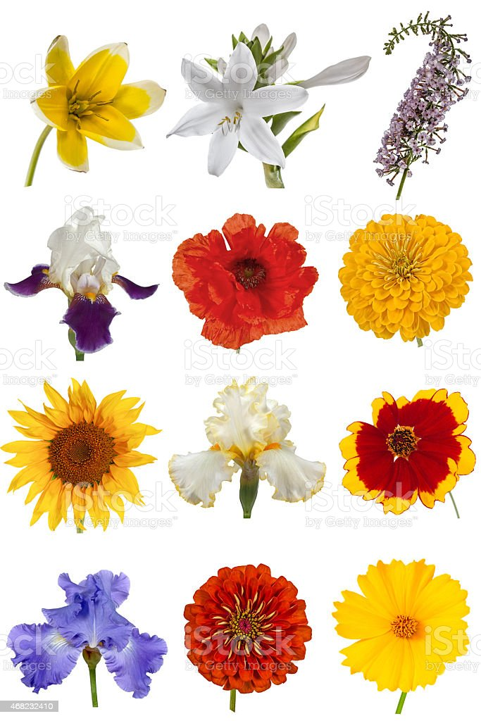 Flower collection, isolated on white background stock photo