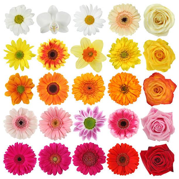 Flower collection picture id147054220?b=1&k=6&m=147054220&s=612x612&w=0&h=gqz6bd rutbx0 rmuzxwruct9u9osmgux7sfgqmgitu=