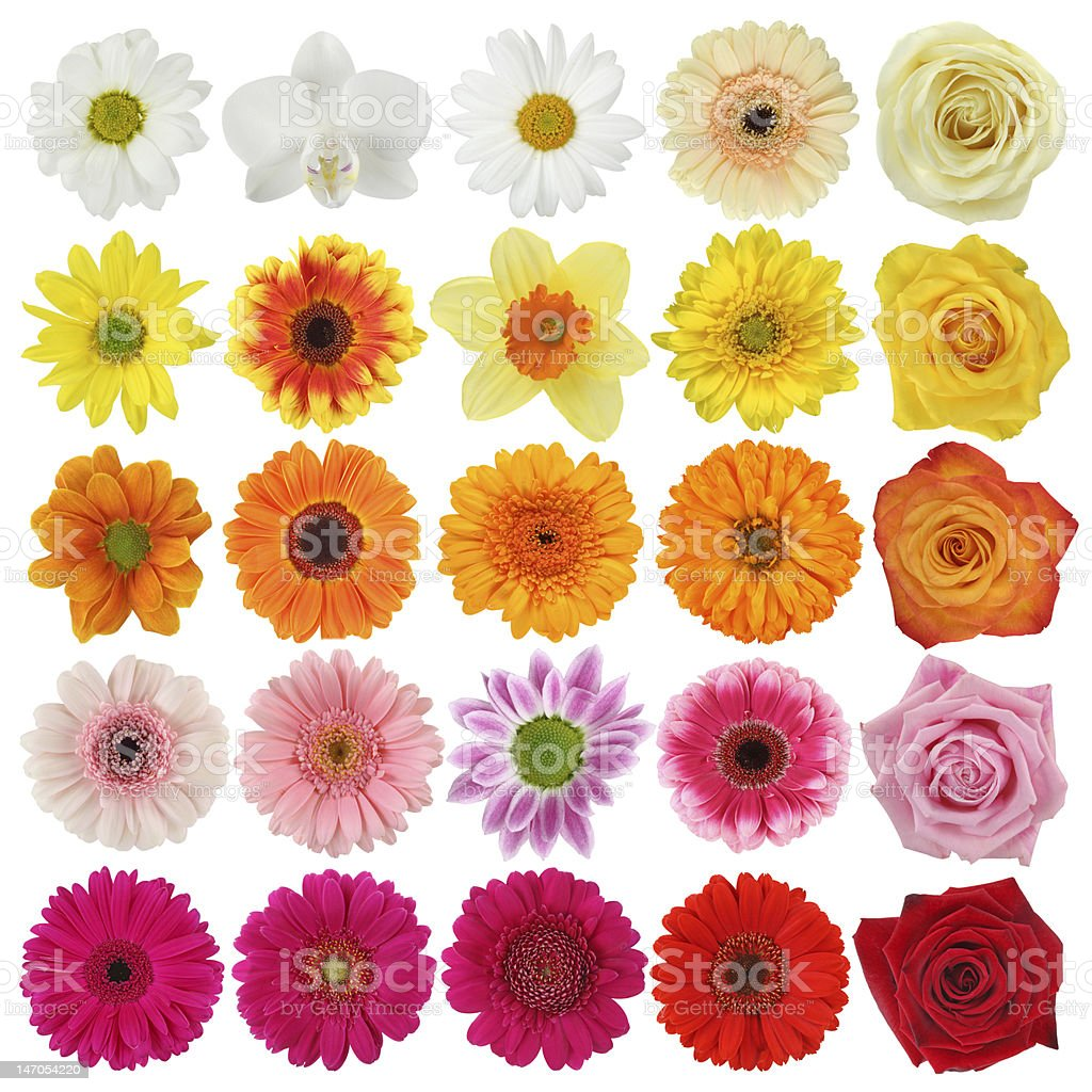 Blume-Kollektion – Foto