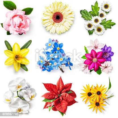 istock Flower collection 628367740