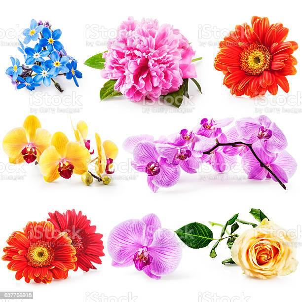 Flower collection picture id637766918?b=1&k=6&m=637766918&s=612x612&h=dptv2s d9w2yhwgd6w3 reahswz mqb0vhz86bnhvkq=