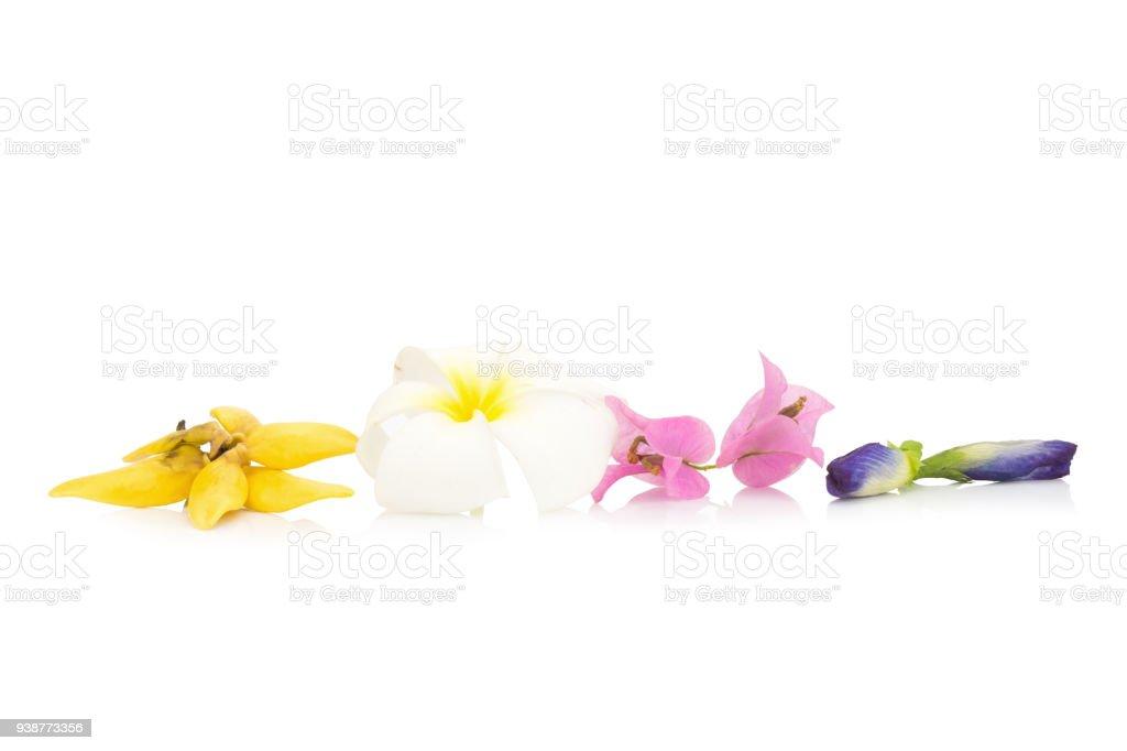 Blume Farbe Gelb Weiß Rosa Blau Isoliert Auf Weißem Hintergrund ...