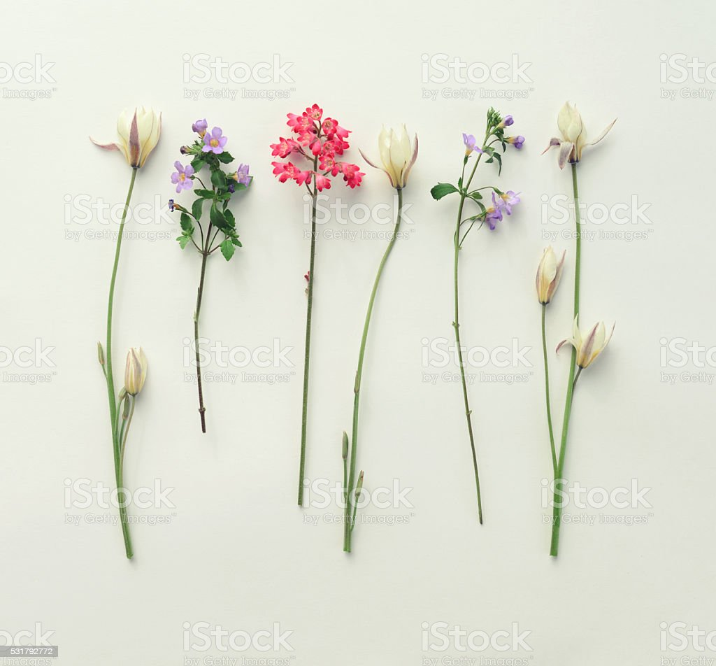 flower, composition flat lay