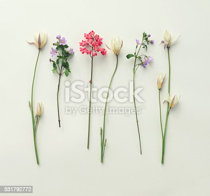 612015846 istock photo flower, composition flat lay 531792772