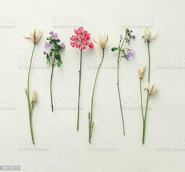 Flower composition flat lay picture id531792772?b=1&k=6&m=531792772&s=612x612&h=rsq vqlxqdaxcb4j3zlqmgqm2acas0 akiogowumqxw=