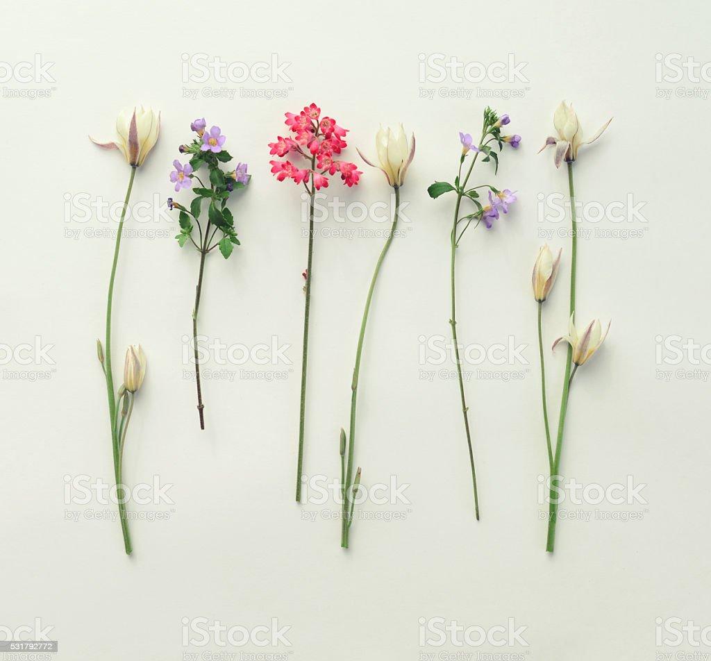 Blumen Komposition flache Legen – Foto