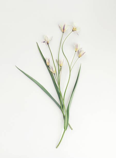 Flower, composition flatlay ストックフォト