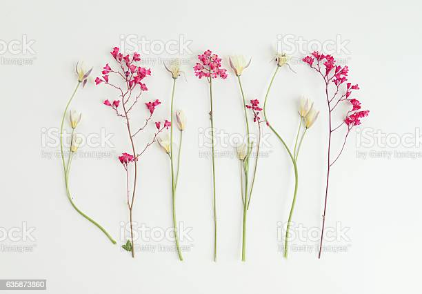 Flower composition flatlay picture id635873860?b=1&k=6&m=635873860&s=612x612&h=ajrqacc stjzwa9nxcwh1pnxozr6zg3gfbouwzzjhyq=