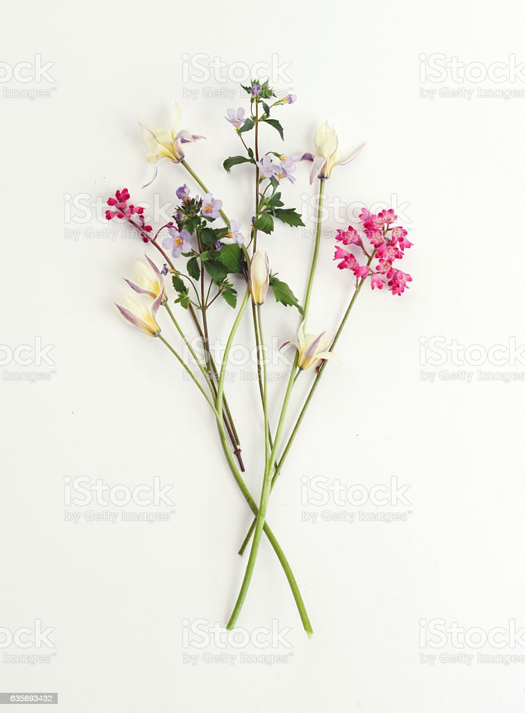 Flower, composition flatlay stock photo