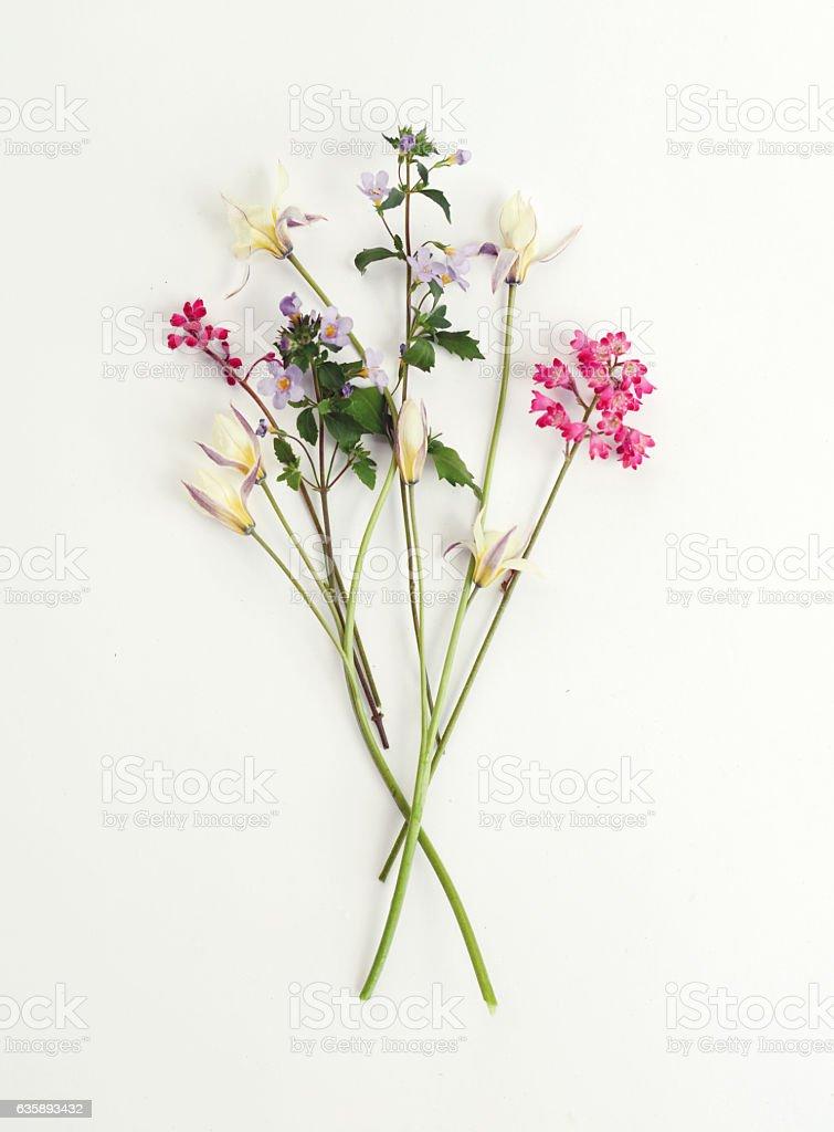Flower, composition flatlay - Photo