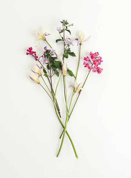 Flower, composition flatlay stock photo
