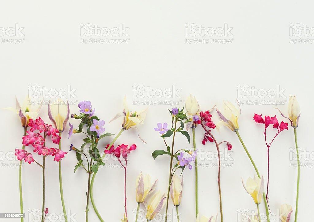 Flower, composition flatlay photo libre de droits