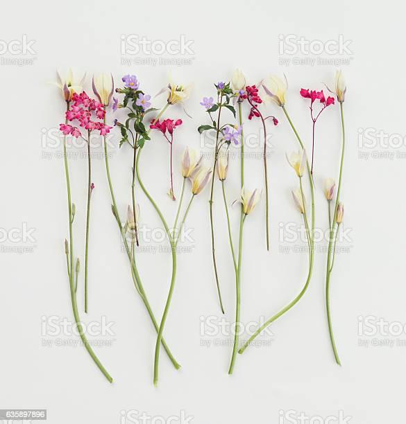 Flower composition flatlay picture id635897896?b=1&k=6&m=635897896&s=612x612&h=sjweljcthzakv6punz5znwjjnwntr4n 49t ch iddi=