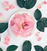 istock Flower ,composition flatlay 635921708
