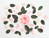 istock Flower ,composition flatlay 635922594