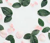 istock Flower ,composition flatlay 635953344