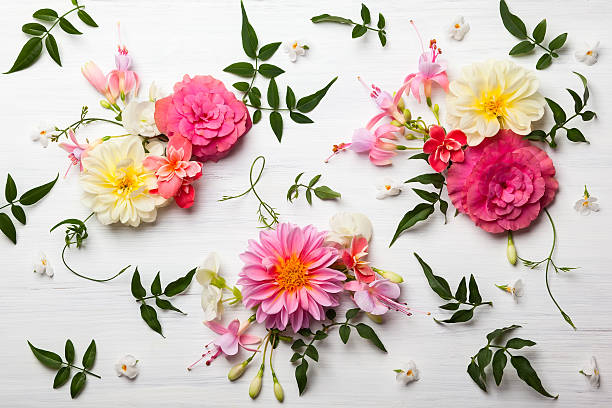 flower composition - single flower stock photos and pictures