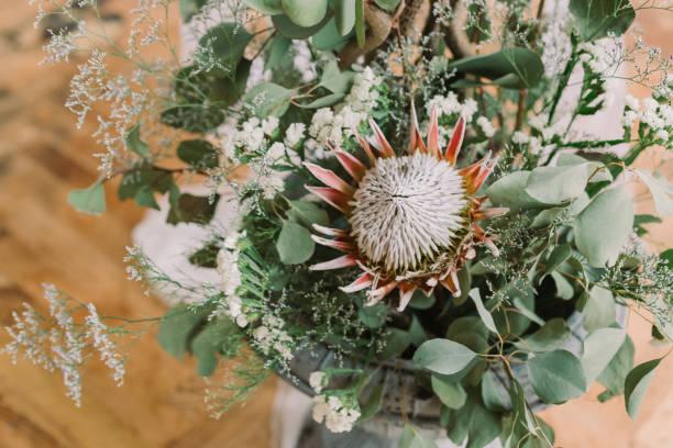 komposition mit grünen rasen, eucaliptus blume und protea - protea strauß stock-fotos und bilder