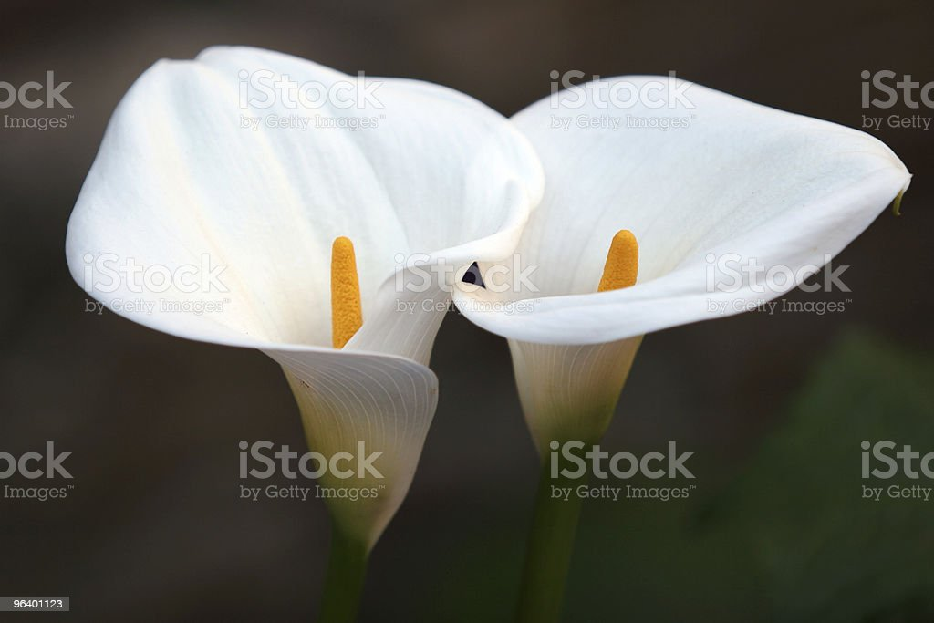 Flower Couple - Royalty-free Adult Stock Photo