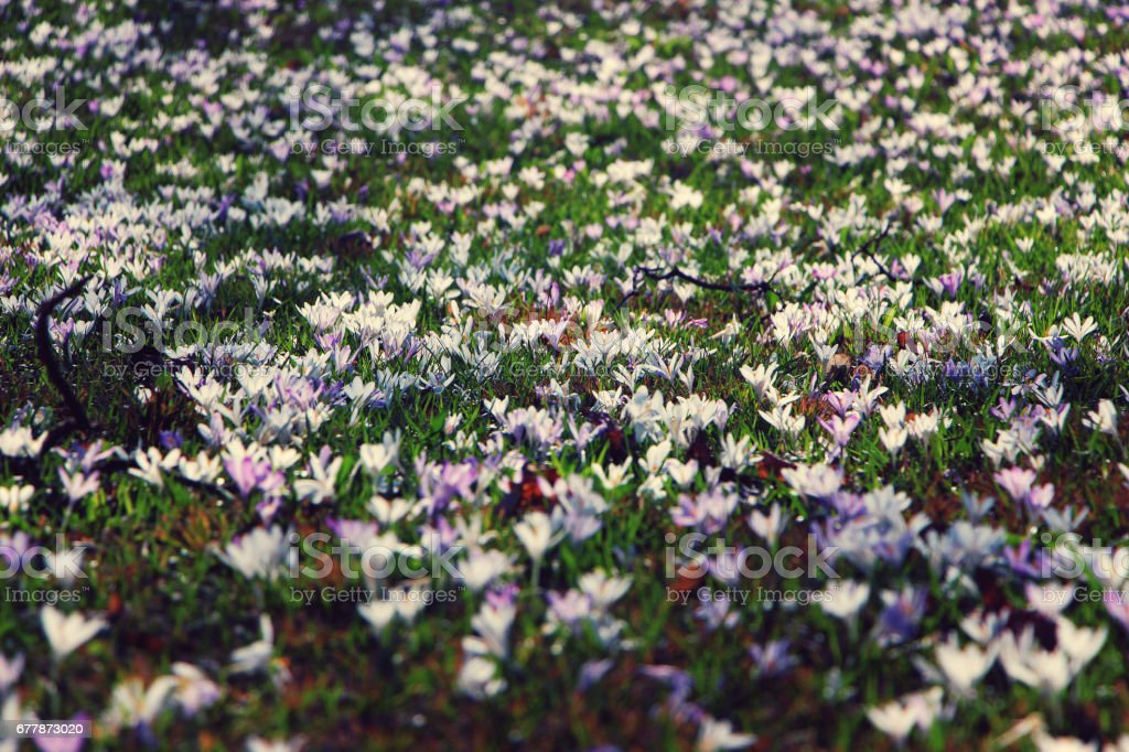 Flower covered meadow stock photo